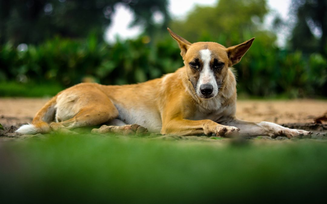 Dog Diet Related Health Problems – Poor Skin & Coat Condition