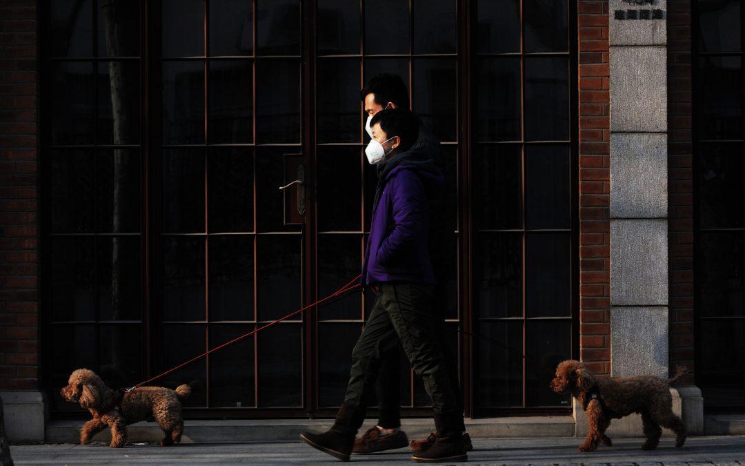 Can My Dog Catch Coronavirus?