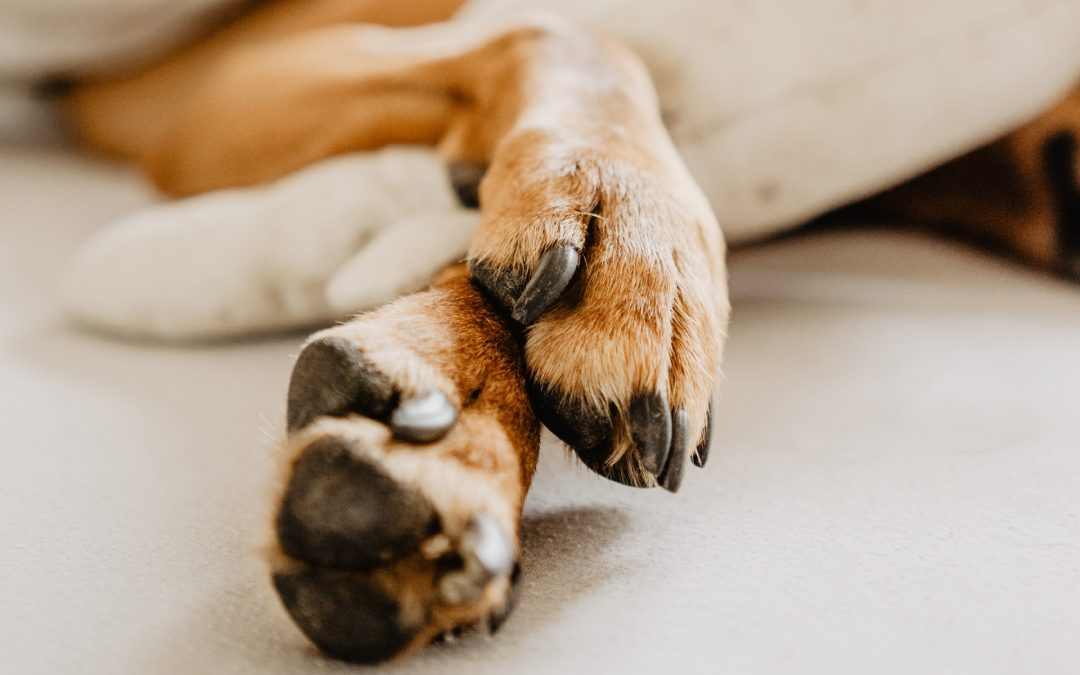 Claw Disease in Dogs
