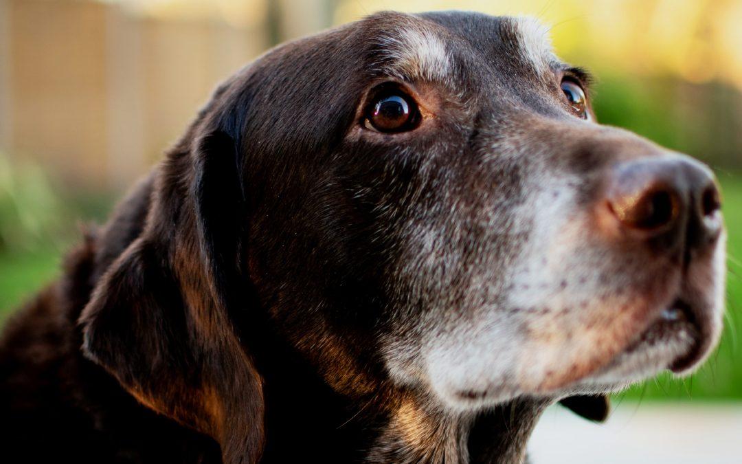 Senior Dog Calorie Requirement Chart