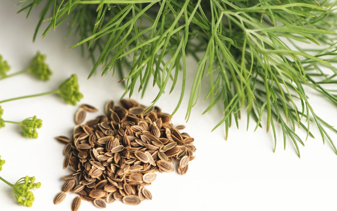 Dill Weed for Dogs