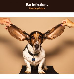 Dog Ear Infection Diet