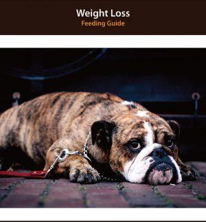 Dog Weight Loss Diet Plan