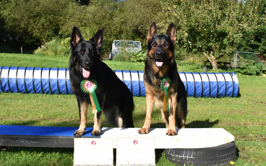 Kennel Club Good Citizen Dog Scheme