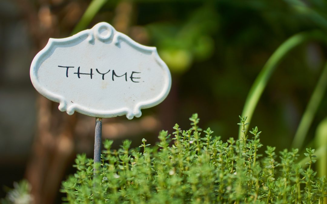 Thyme for Dogs