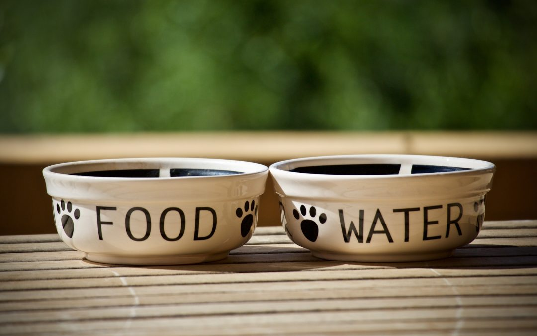 Always Wash Your Dog's Food & Water Bowls