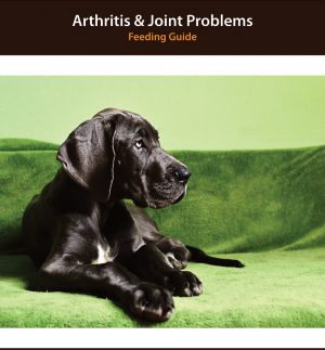 Dog Arthritis Diet Plan
