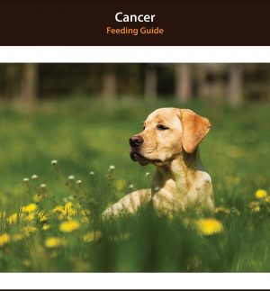 Dog Cancer Diet