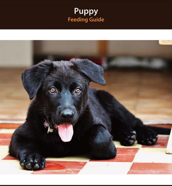 Puppy Diet Plan