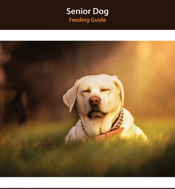 Senior Dog Diet Homemade