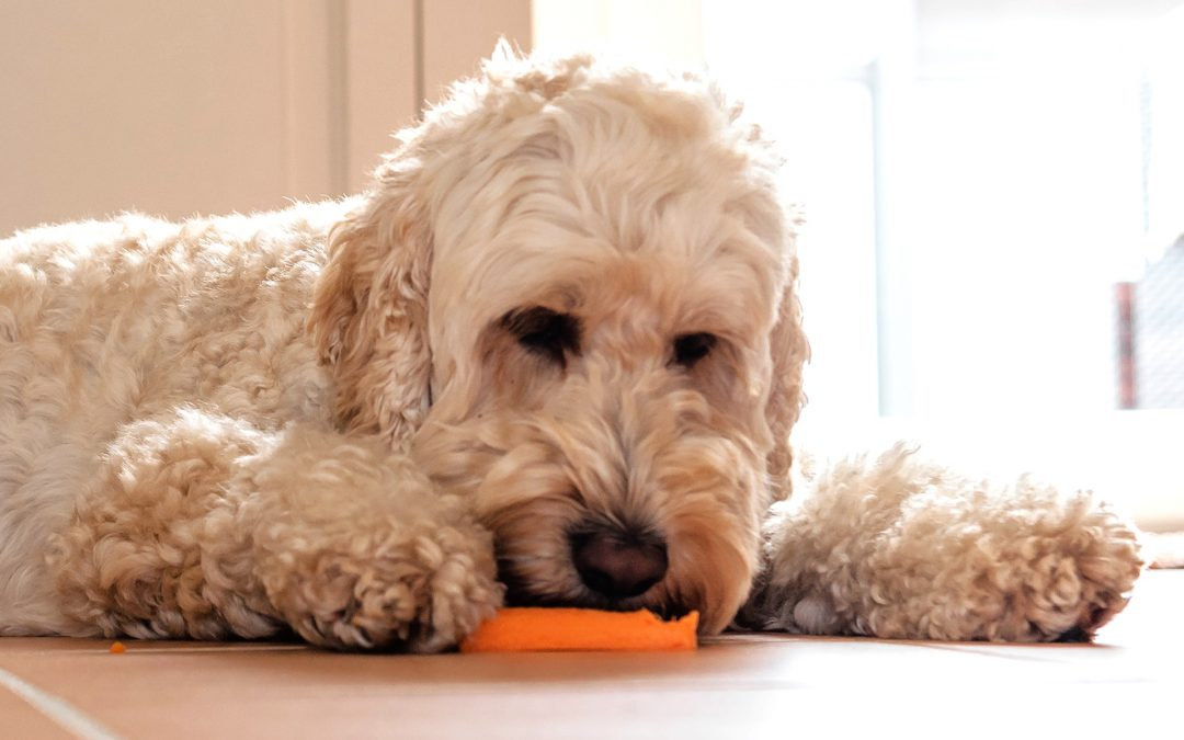 Is a Vegan Diet Right for Your Dog?