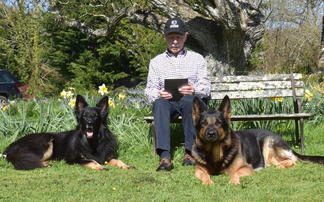 Finding a Canine Nutritionist Online