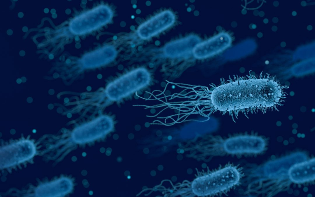 Dogs & Helicobacter Pylori