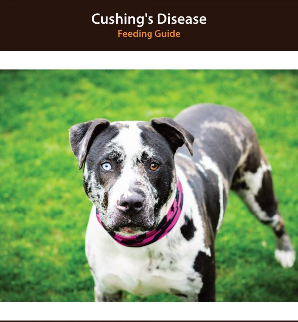 Dog Cushing's Disease Diet